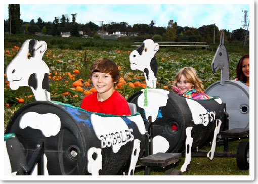 Cow Train at Galey Farms