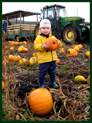 Pumpkinfest at Galey Farms