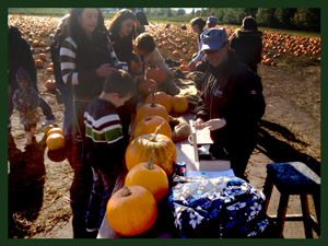 Beautiful Pumpkins at Galey Farms
